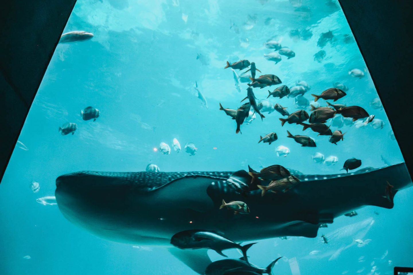 The Largest Aquarium In The World 7 Things You Need To Know Holly